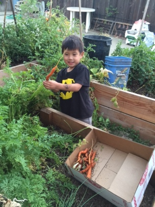 thomas-and-his-carrot-haul-img_0530